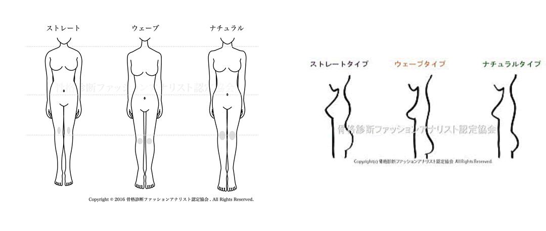 骨格タイプ
